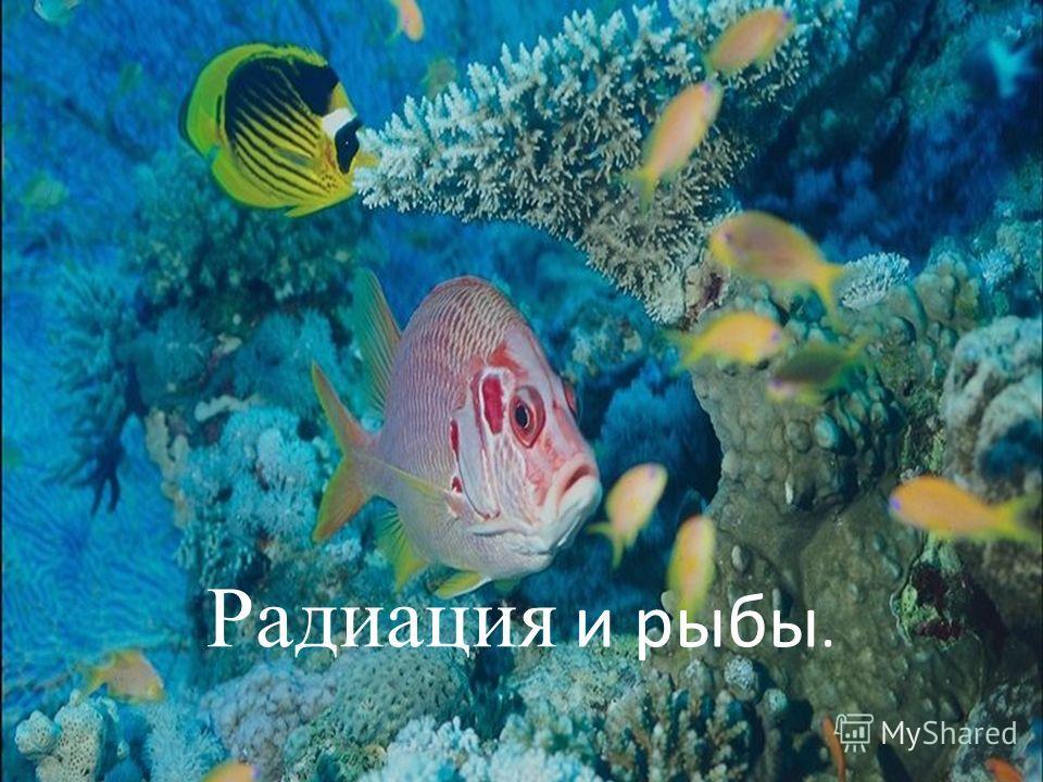 Радиация и рыбы.
