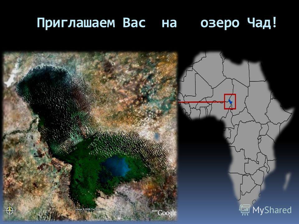 Приглашаем Вас на озеро Чад!