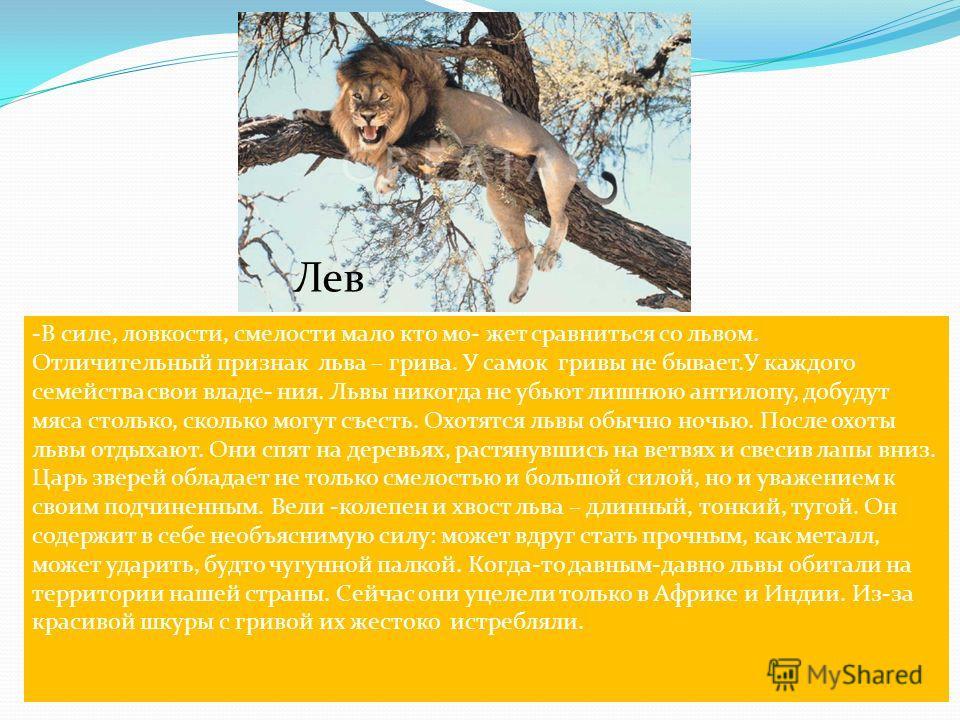 Лев -В силе, ловкости, смелости мало кто мо- жет сравниться со львом. Отличительный признак льва – грива. У самок гривы не бывает.У каждого семейства свои владе- ния. Львы никогда не убьют лишнюю антилопу, добудут мяса столько, сколько могут съесть.