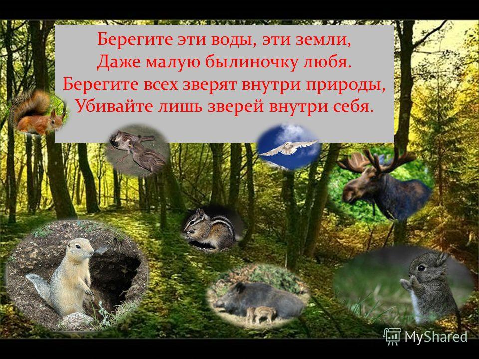 Берегите эти воды, эти земли, Даже малую былиночку любя. Берегите всех зверят внутри природы, Убивайте лишь зверей внутри себя.