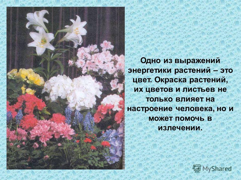 Одно из выражений энергетики растений – это цвет. Окраска растений, их цветов и листьев не только влияет на настроение человека, но и может помочь в излечении.