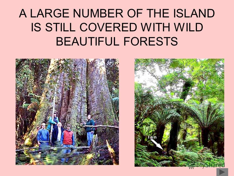 A LARGE NUMBER OF THE ISLAND IS STILL COVERED WITH WILD BEAUTIFUL FORESTS