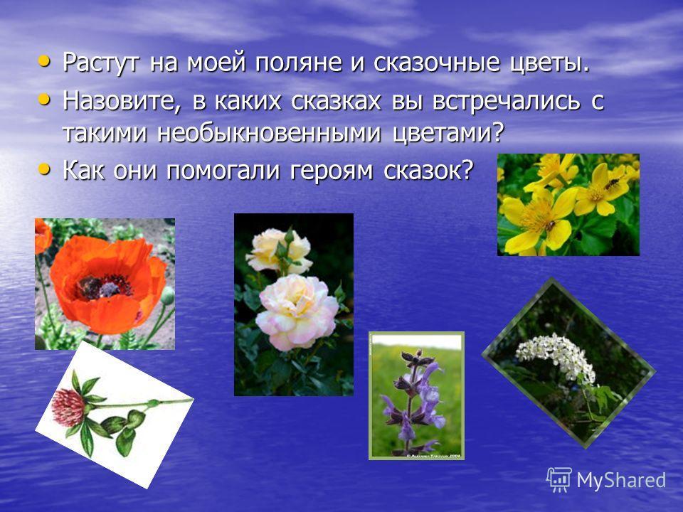 Растут на моей поляне и сказочные цветы. Растут на моей поляне и сказочные цветы. Назовите, в каких сказках вы встречались с такими необыкновенными цветами? Назовите, в каких сказках вы встречались с такими необыкновенными цветами? Как они помогали г