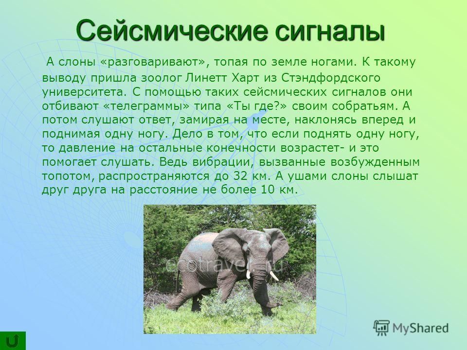 Сейсмические сигналы А слоны «разговаривают», топая по земле ногами. К такому выводу пришла зоолог Линетт Харт из Стэндфордского университета. С помощью таких сейсмических сигналов они отбивают «телеграммы» типа «Ты где?» своим собратьям. А потом слу