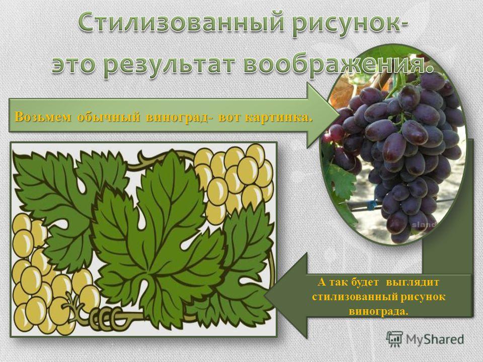 Возьмем обычный виноград- вот картинка. А так будет выглядит стилизованный рисунок винограда.