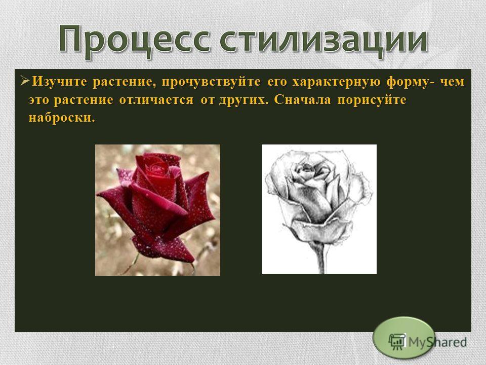 Изучите растение, прочувствуйте его характерную форму- чем это растение отличается от других. Сначала порисуйте наброски. 1
