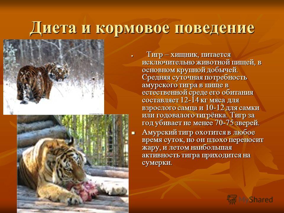 Диета и кормовое поведение Тигр – хищник, питается исключительно животной пищей, в основном крупной добычей. Средняя суточная потребность амурского тигра в пище в естественной среде его обитания составляет 12-14 кг мяса для взрослого самца и 10-12 дл