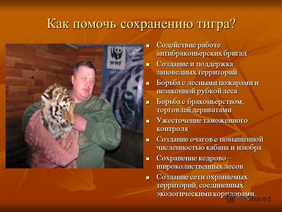 Как помочь сохранению тигра? Содействие работе антибраконьерских бригад Содействие работе антибраконьерских бригад Создание и поддержка заповедных территорий Создание и поддержка заповедных территорий Борьба с лесными пожарами и незаконной рубкой лес