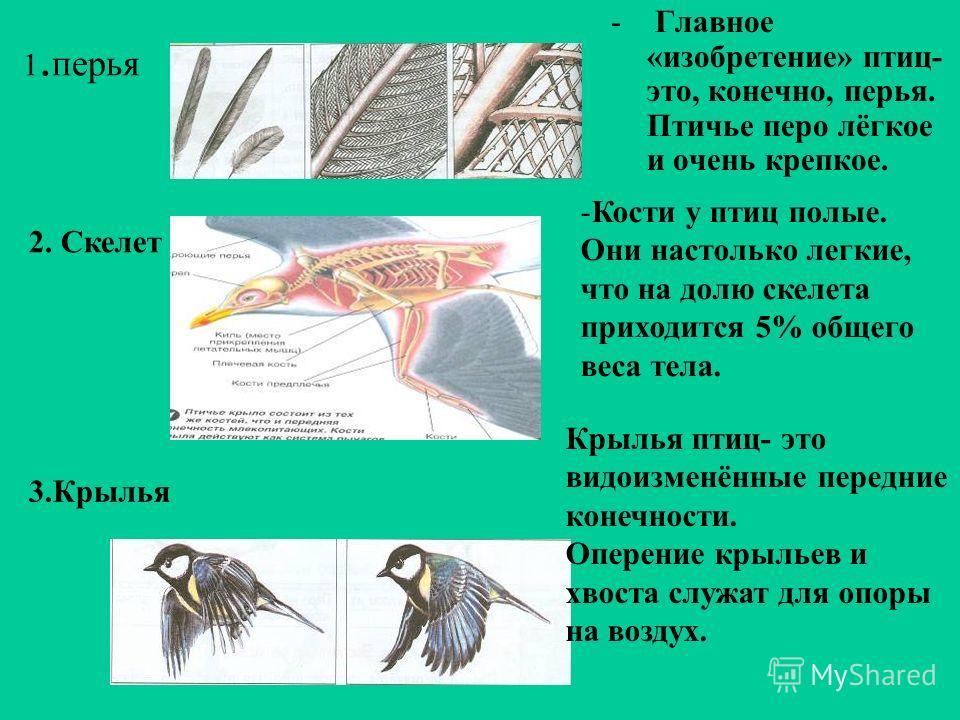 1. перья - Главное «изобретение» птиц- это, конечно, перья. Птичье перо лёгкое и очень крепкое. -Кости у птиц полые. Они настолько легкие, что на долю скелета приходится 5% общего веса тела. 2. Скелет 3.Крылья Крылья птиц- это видоизменённые передние