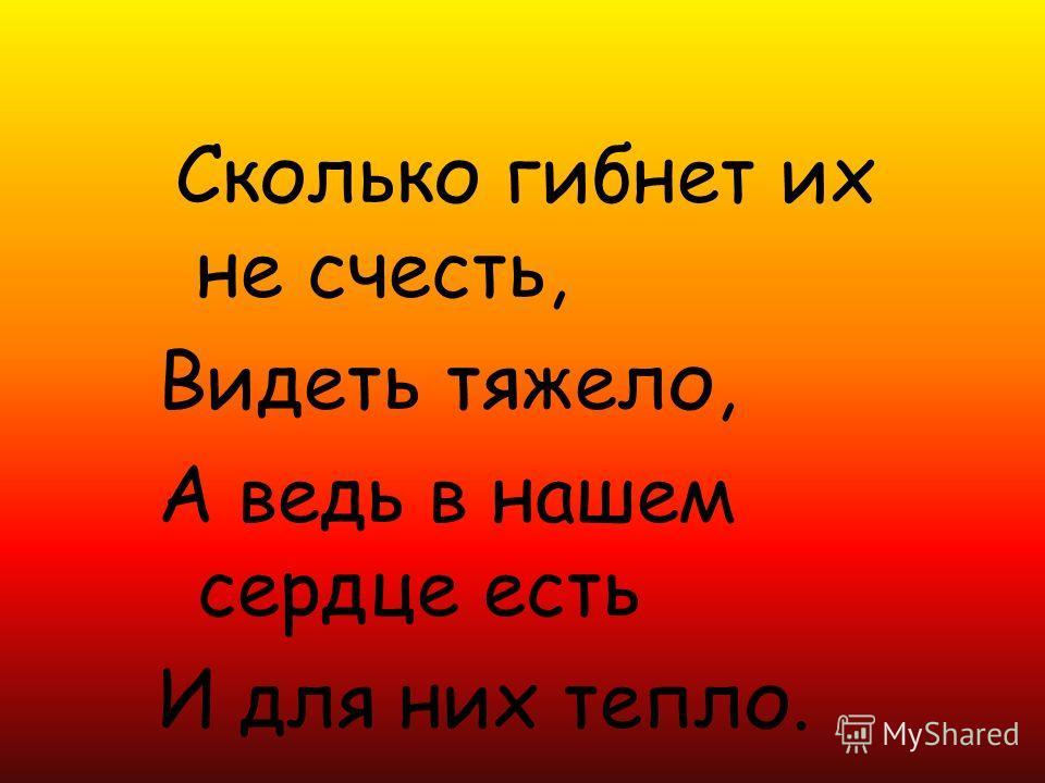 Сколько гибнет их не счесть, Видеть тяжело, А ведь в нашем сердце есть И для них тепло.