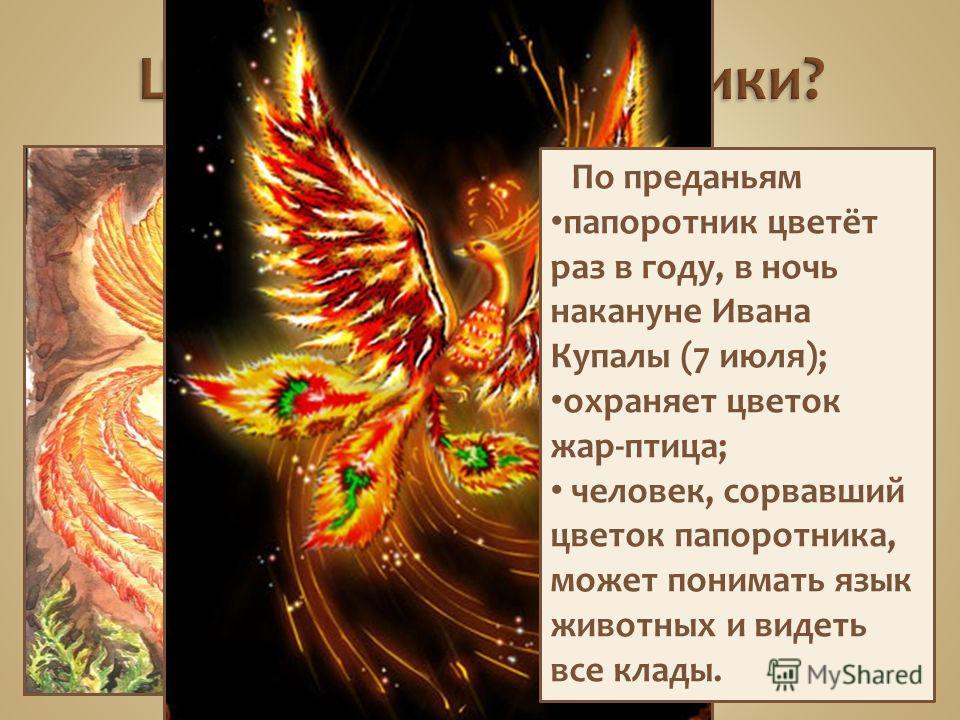 По преданьям папоротник цветёт раз в году, в ночь накануне Ивана Купалы (7 июля); охраняет цветок жар-птица; человек, сорвавший цветок папоротника, может понимать язык животных и видеть все клады.