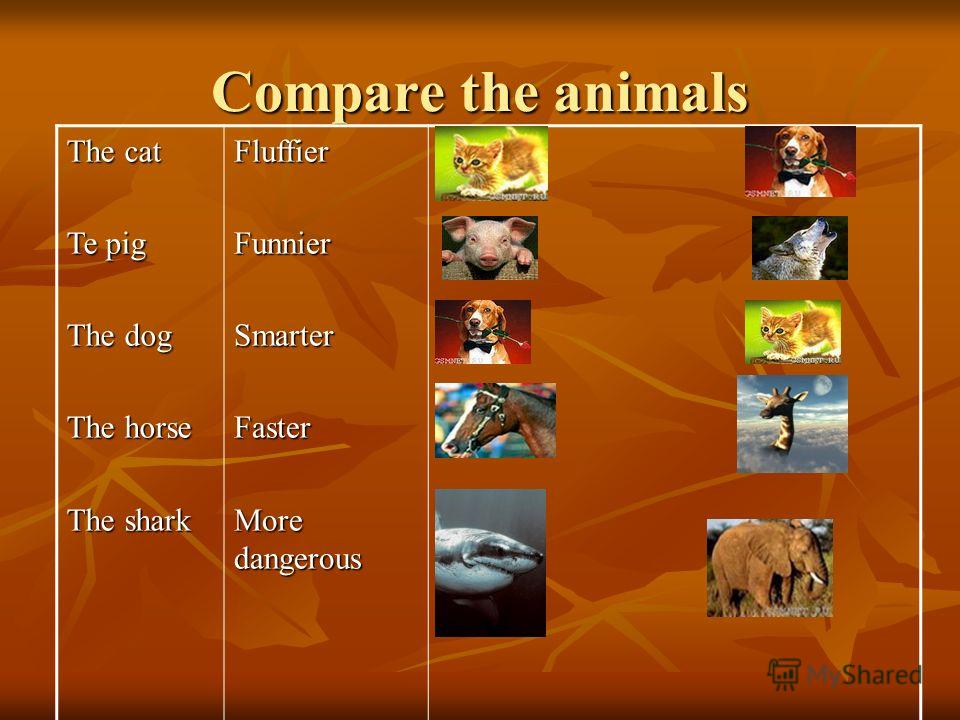 Compare the animals The cat Te pig The dog The horse The shark FluffierFunnierSmarterFaster More dangerous
