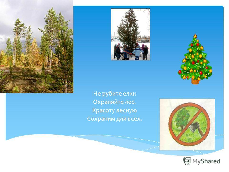 Не рубите елки Охраняйте лес. Красоту лесную Сохраним для всех.