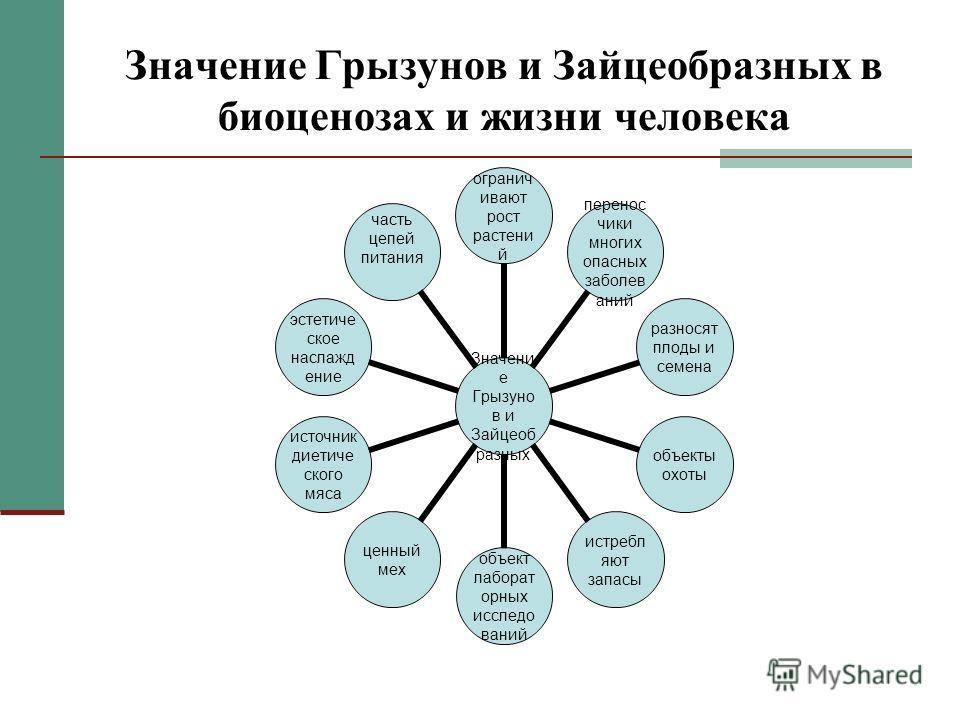 Значение Грызунов и Зайцеобразных в биоценозах и жизни человека Значение Грызунов и Зайцеобразных 12345678910