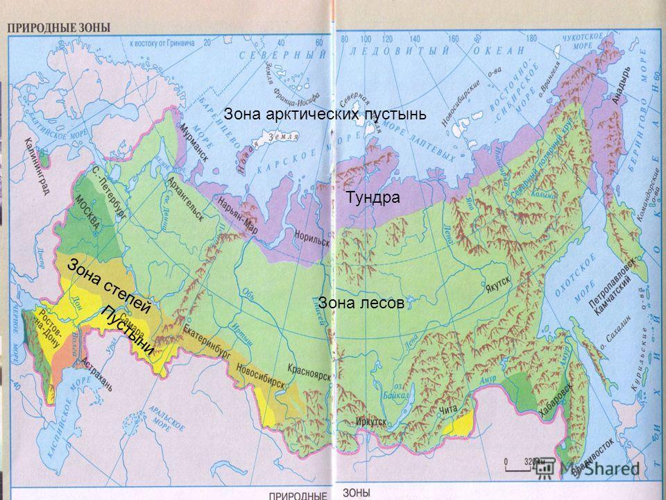 Зона арктических пустынь Тундра Зона лесов Зона степей Пустыни