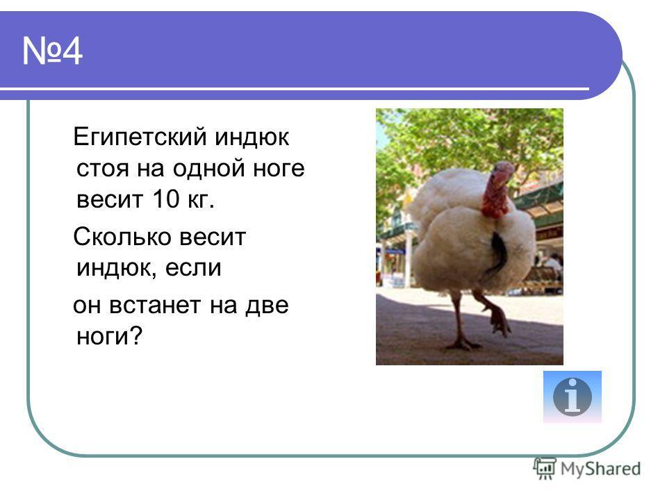 4 Египетский индюк стоя на одной ноге весит 10 кг. Сколько весит индюк, если он встанет на две ноги?