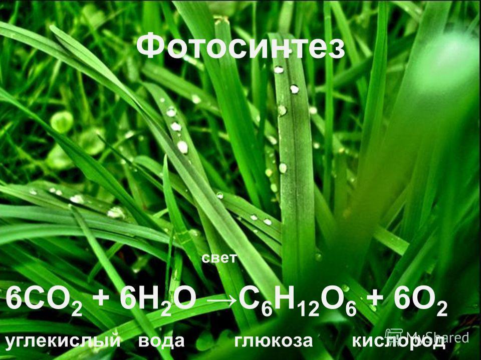 свет 6СО 2 + 6Н 2 О С 6 Н 12 О 6 + 6О 2 углекислый вода глюкоза кислород газ Фотосинтез