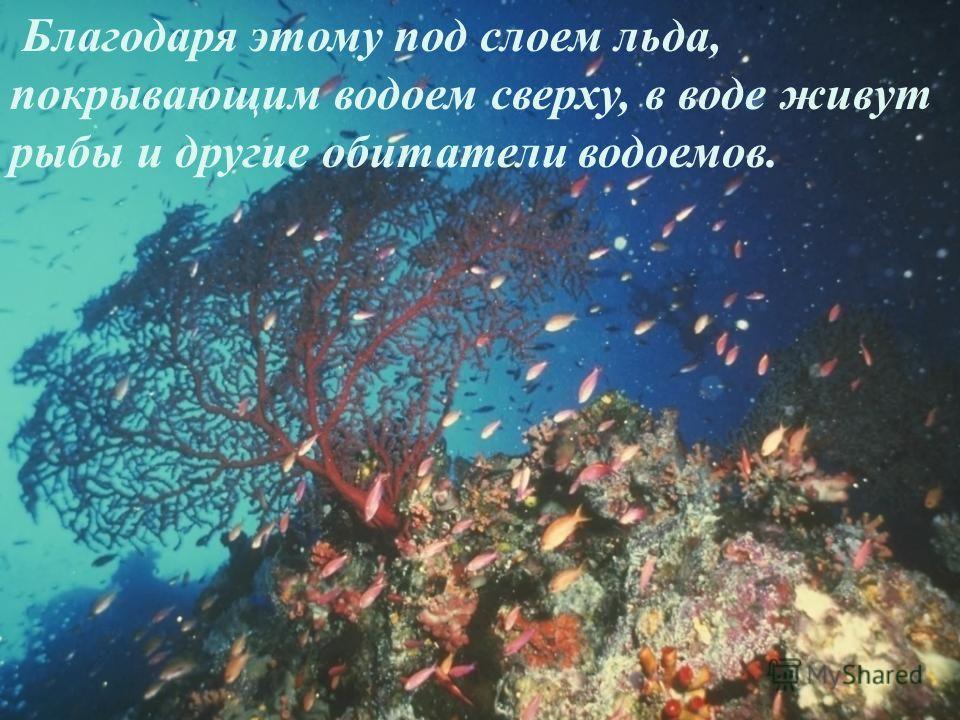 Благодаря этому под слоем льда, покрывающим водоем сверху, в воде живут рыбы и другие обитатели водоемов.