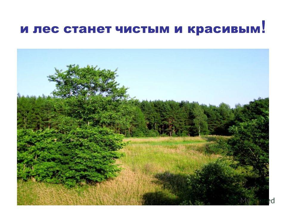 и лес станет чистым и красивым !