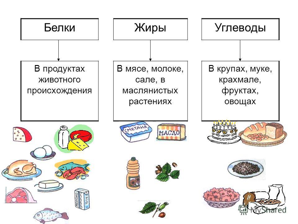 БелкиЖирыУглеводы В продуктах животного происхождения В мясе, молоке, сале, в маслянистых растениях В крупах, муке, крахмале, фруктах, овощах