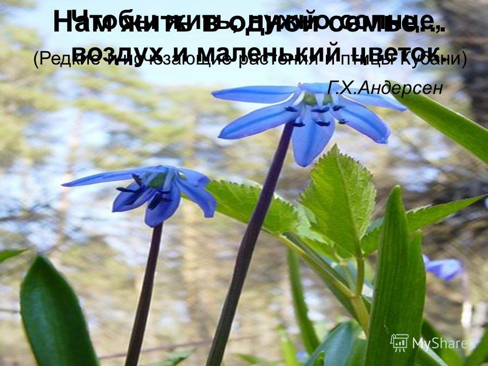Чтобы жить, нужно солнце, воздух и маленький цветок. Г.Х.Андерсен Нам жить в одной семье… (Редкие и исчезающие растения и птицы Кубани)