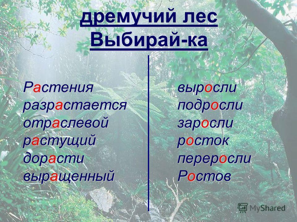 дремучий лес Выбирай-ка Растения разрастается отраслевой растущий дорасти выращенный выросли подросли заросли росток переросли Ростов
