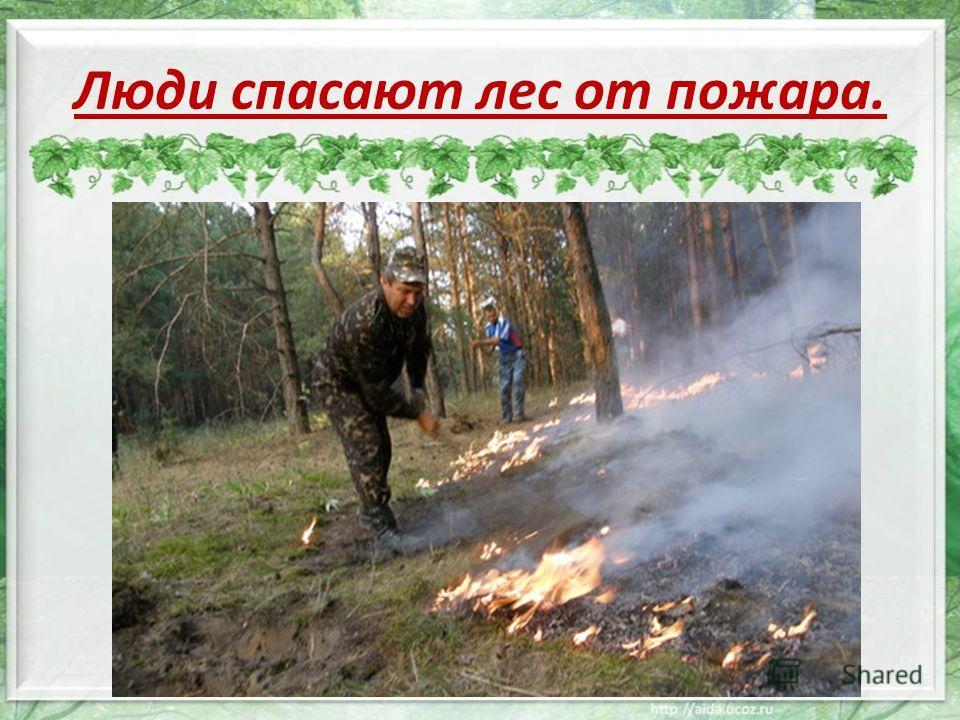 Люди спасают лес от пожара.