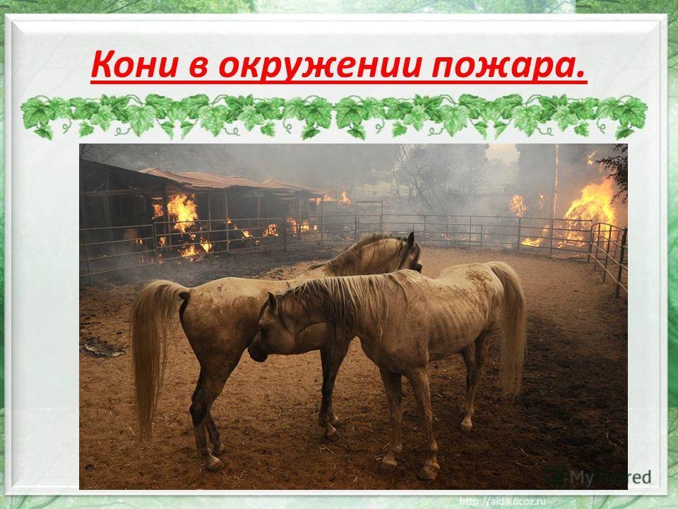 Кони в окружении пожара.