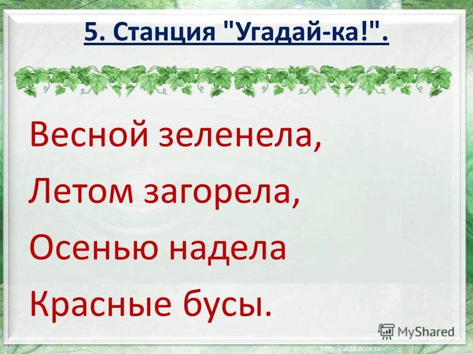 Весной зеленела, Летом загорела, Осенью надела Красные бусы. 5. Станция Угадай-ка!.