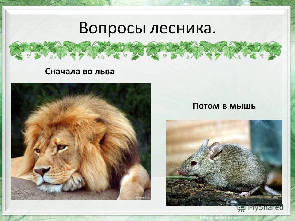 Сначала во льва Потом в мышь