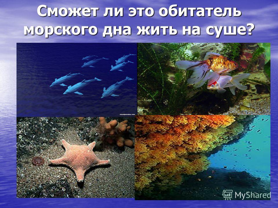 Сможет ли это обитатель морского дна жить на суше?