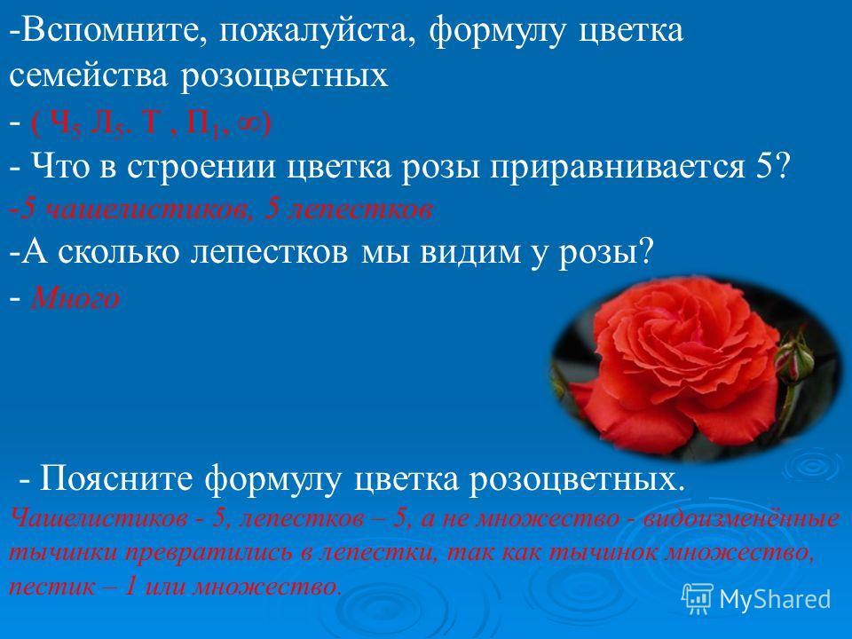 -Вспомните, пожалуйста, формулу цветка семейства розоцветных - ( Ч 5 Л 5. Т, П 1, ) - Что в строении цветка розы приравнивается 5? -5 чашелистиков, 5 лепестков -А сколько лепестков мы видим у розы? - Много - Поясните формулу цветка розоцветных. Чашел