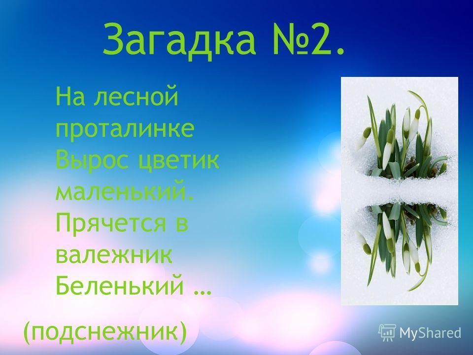 Загадка 2. На лесной проталинке Вырос цветик маленький. Прячется в валежник Беленький … (подснежник)