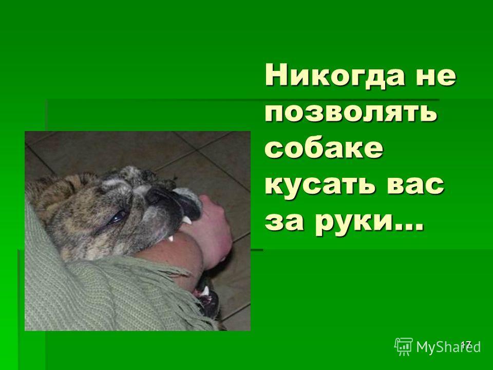 17 Никогда не позволять собаке кусать вас за руки...