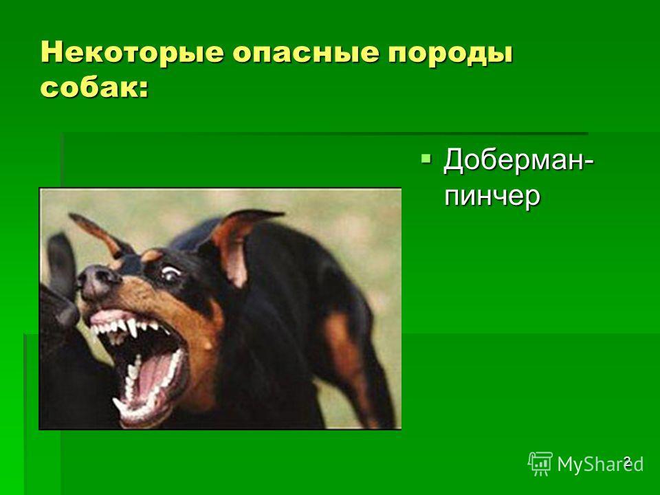 2 Некоторые опасные породы собак: Доберман- пинчер Доберман- пинчер