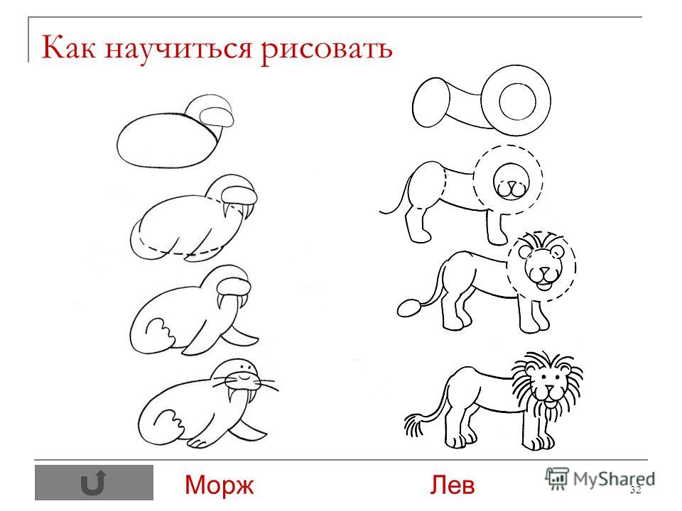 32 Как научиться рисовать Морж Лев