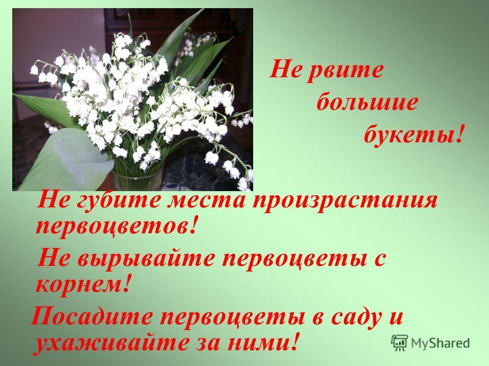 Не рвите большие букеты! Не губите места произрастания первоцветов! Не вырывайте первоцветы с корнем! Посадите первоцветы в саду и ухаживайте за ними!