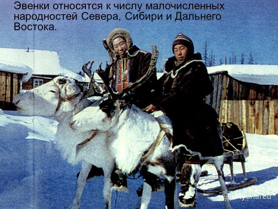 Эвенки относятся к числу малочисленных народностей Севера, Сибири и Дальнего Востока.