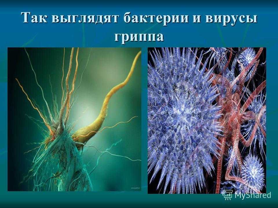 Так выглядят бактерии и вирусы гриппа