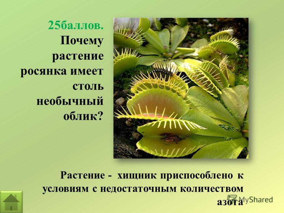 25баллов. Почему растение росянка имеет столь необычный облик? Растение - хищник приспособлено к условиям с недостаточным количеством азота