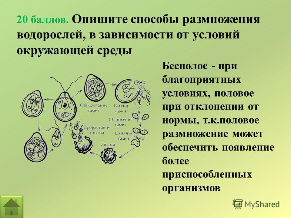 20 баллов. Опишите способы размножения водорослей, в зависимости от условий окружающей среды Бесполое - при благоприятных условиях, половое при отклонении от нормы, т.к.половое размножение может обеспечить появление более приспособленных организмов