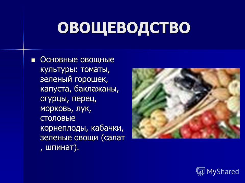ОВОЩЕВОДСТВО ОВОЩЕВОДСТВО Основные овощные культуры: томаты, зеленый горошек, капуста, баклажаны, огурцы, перец, морковь, лук, столовые корнеплоды, кабачки, зеленые овощи (салат, шпинат). Основные овощные культуры: томаты, зеленый горошек, капуста, б
