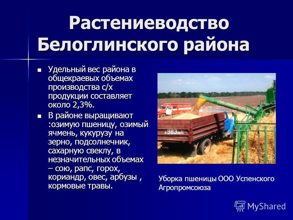 Растениеводство Белоглинского района Растениеводство Белоглинского района Удельный вес района в общекраевых объемах производства с/х продукции составляет около 2,3%. Удельный вес района в общекраевых объемах производства с/х продукции составляет окол