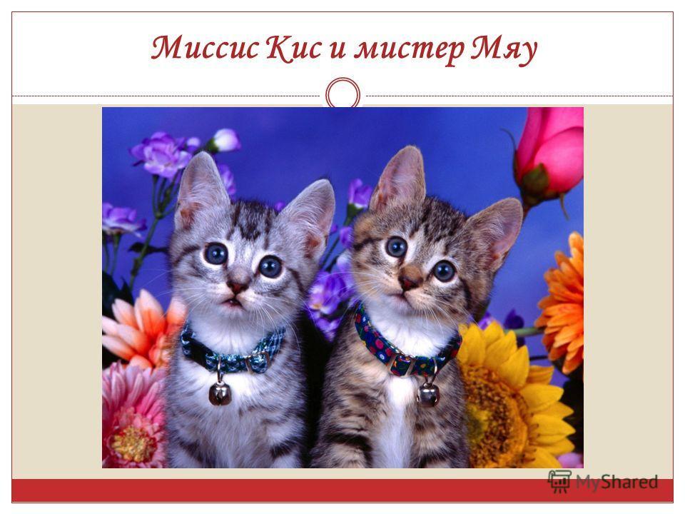 Миссис Кис и мистер Мяу