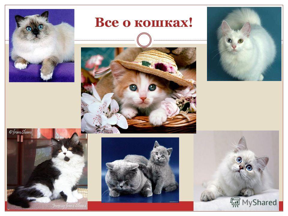 Все о кошках!