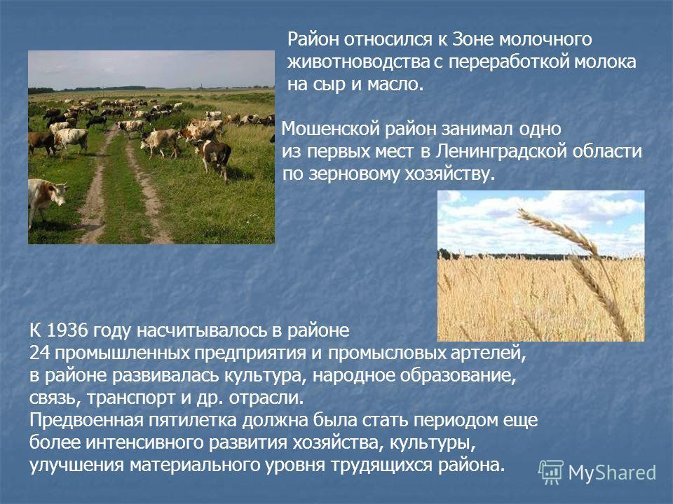 Район относился к Зоне молочного животноводства с переработкой молока на сыр и масло. Мошенской район занимал одно из первых мест в Ленинградской области по зерновому хозяйству. К 1936 году насчитывалось в районе 24промышленных предприятия и промысло