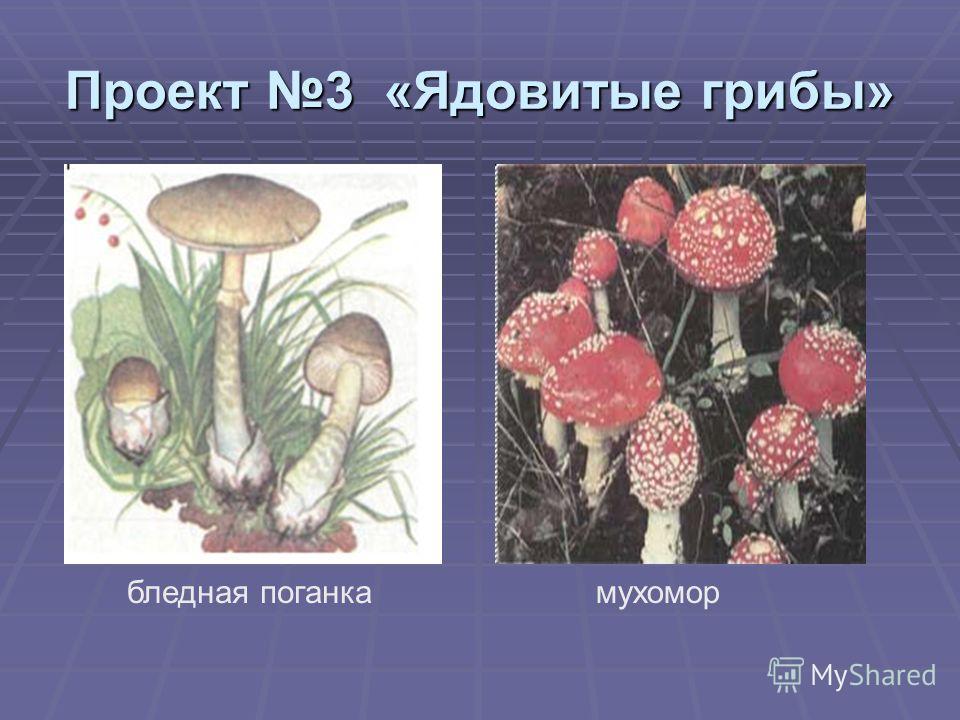 Проект 3 «Ядовитые грибы» бледная поганкамухомор