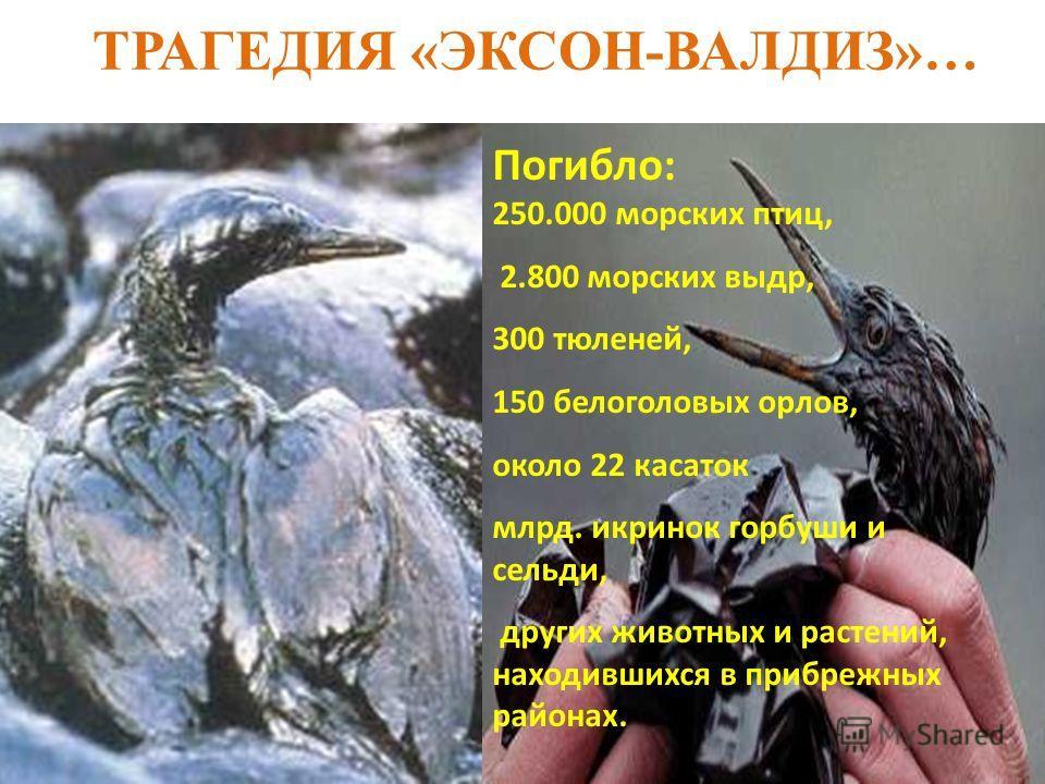 ТРАГЕДИЯ «ЭКСОН-ВАЛДИЗ»… Погибло: 250.000 морских птиц, 2.800 морских выдр, 300 тюленей, 150 белоголовых орлов, около 22 касаток млрд. икринок горбуши и сельди, других животных и растений, находившихся в прибрежных районах.