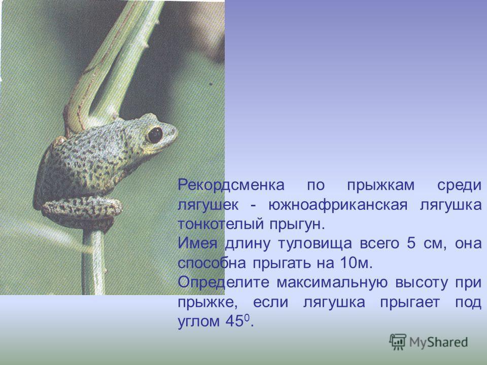Рекордсменка по прыжкам среди лягушек - южноафриканская лягушка тонкотелый прыгун. Имея длину туловища всего 5 см, она способна прыгать на 10м. Определите максимальную высоту при прыжке, если лягушка прыгает под углом 45 0.