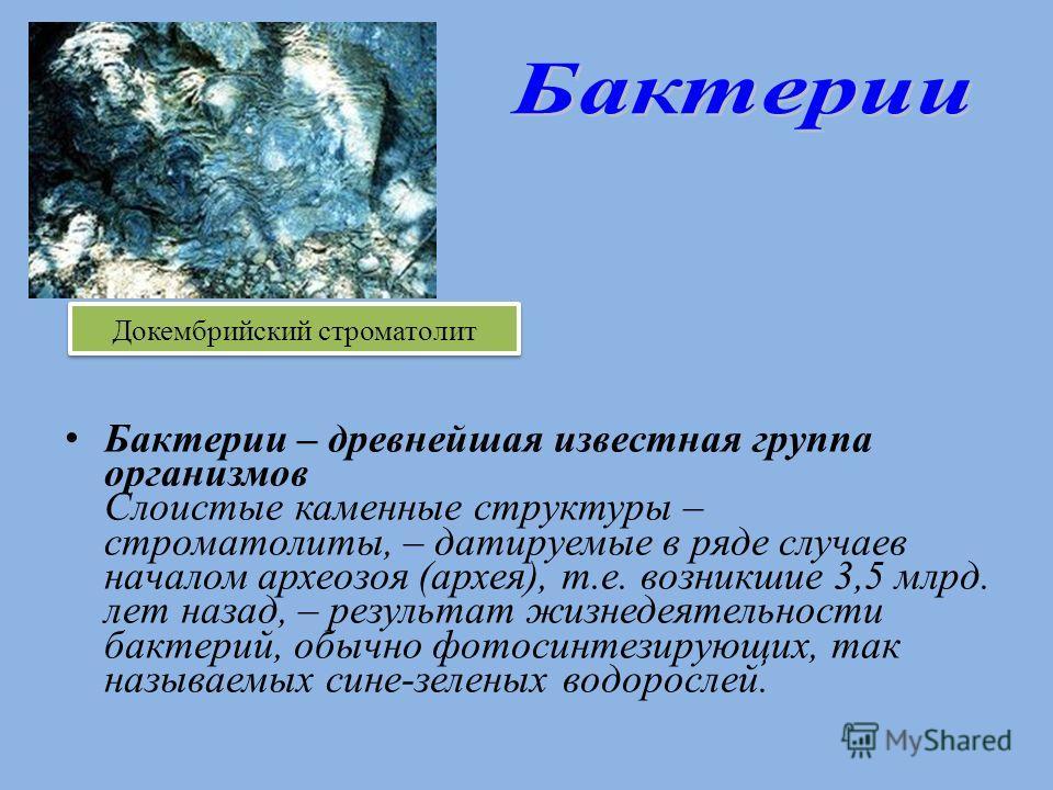 Бактерии – древнейшая известная группа организмов Слоистые каменные структуры – строматолиты, – датируемые в ряде случаев началом археозоя (архея), т.е. возникшие 3,5 млрд. лет назад, – результат жизнедеятельности бактерий, обычно фотосинтезирующих,